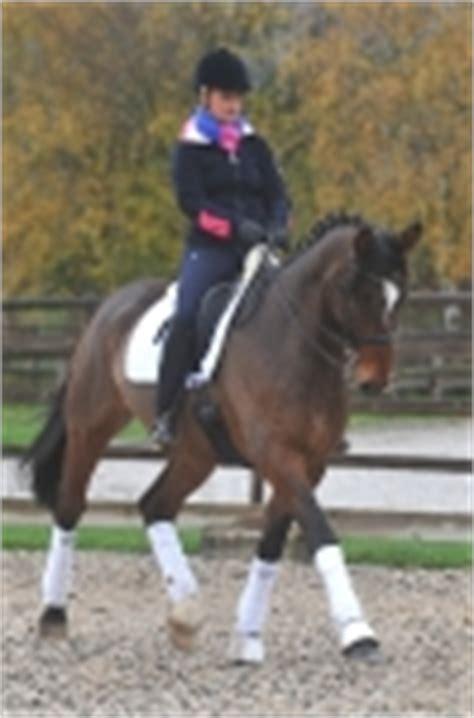 Leoni Jump Navy am reiter pferdetrends