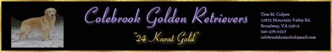 colebrook golden retrievers home www colebrookgoldens