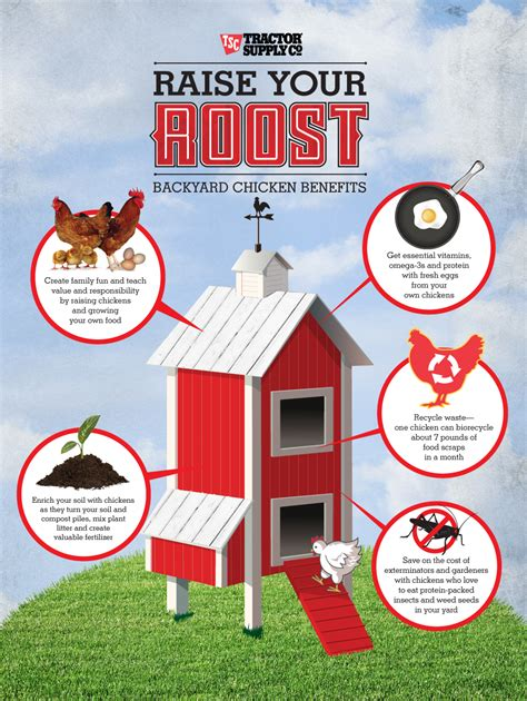 benefits of backyard chickens chick days leads to fresh eggs unexpected benefits