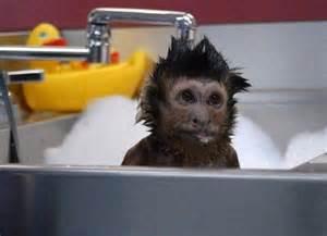bath time for monkey
