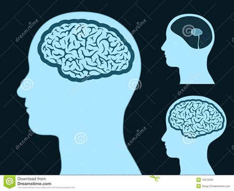 Male Head Silhouette With Small And Big Brain Stock Vector Big Brain Pricing