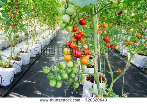 Hydroponics Stock Images, Royalty Free Images & Vectors