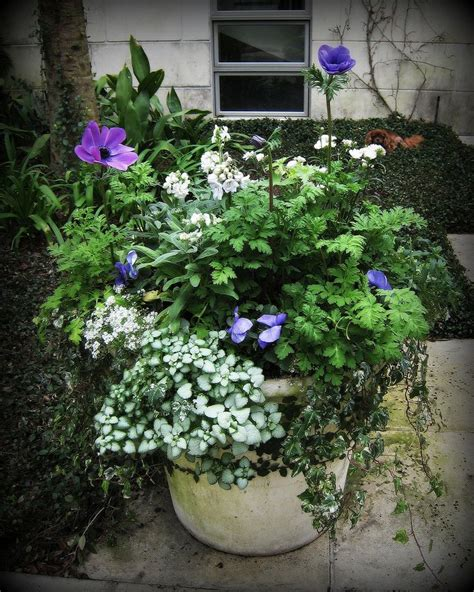 images of 6 flowers in pots flower container container gardening haver