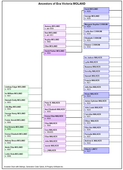 ancestor siblings sle family tree charts