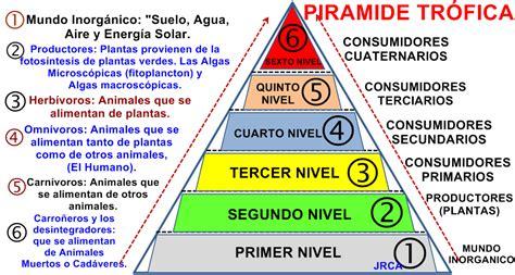 clases de cadenas alimenticias acuaticas naturales 5 176 y 6 176 escuela n 176 1 27 pir 193 mides tr 211 ficas