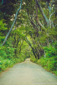 cherry tree hill on the east coast of barbados cherry tree hill st andrew barbados explore