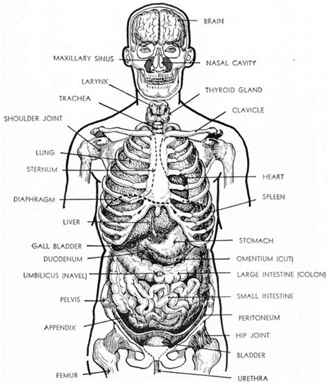 sections of the body anatomy human body parts list
