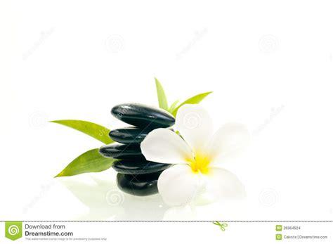 imagenes de flores zen piedra negra del zen con la flor blanca imagenes de