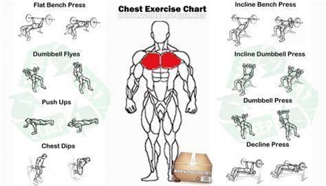 chest exercise chart best fitness workout arms abs
