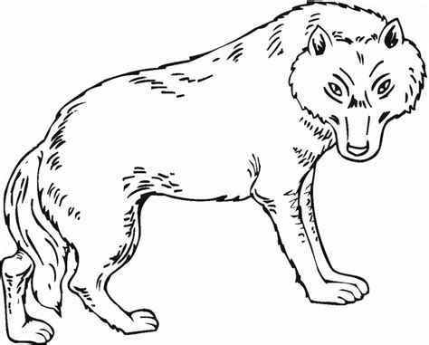 realistic coloring pages of wolves coloring pages coloring