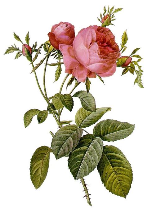 curare con i fiori messaggi floreali di ottimismo