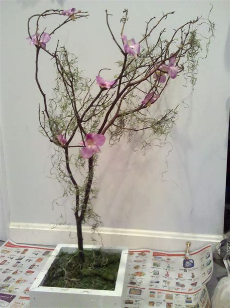 bulk branches for centerpieces 17 best images about on manzanita trees