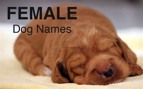 human names for dogs names great ideas for naming your puppy the happy puppy site