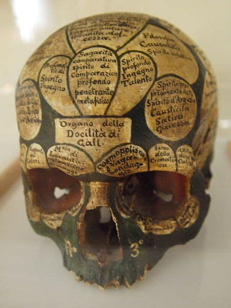 skull cross section franz joseph gall an austrian doctor came up with the