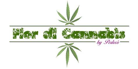 fiore di cannabis e nato il gelato ai fiori di canapa dolcevita