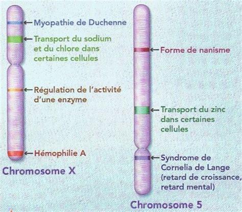 chromosome y supplementaire tous pareils ou tous diff 233 rents envie de svt