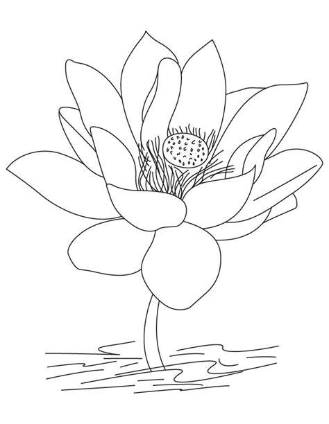 kumpulan sketsa gambar bunga hitam putih  diwarnai