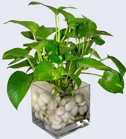 in house plants best 25 water plants indoor ideas on pinterest water