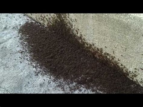ants in my room ant infestation in my room