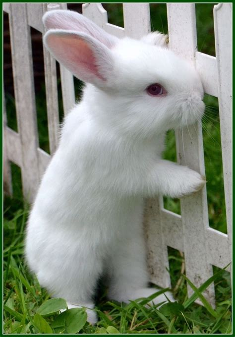 Bunny White 78 best handsome images on anime animals