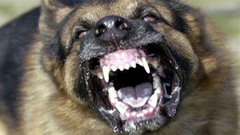most vicious breeds most dangerous dogs breeds list