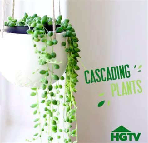 great house plants popsugar home middle east