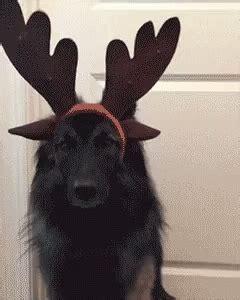 kutya karacsony gif kutya karacsony christmas discover share gifs