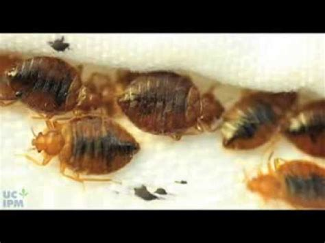 bed bugs youtube how to use a bed bug detector youtube