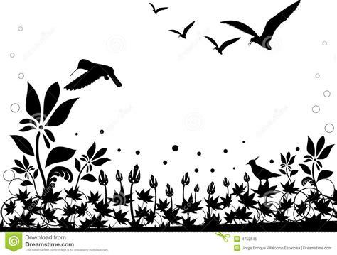 fotos de naturaleza en blanco y negro blog de fotograf 237 a vector blanco y negro de la naturaleza foto de archivo
