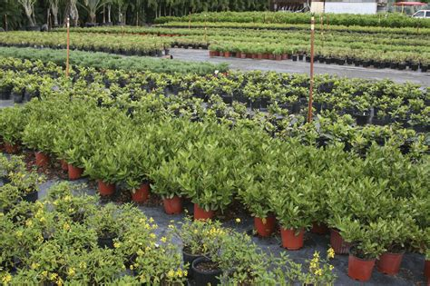 nursery plants container nursery stock and container trees hortifeeds