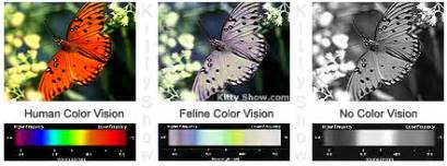 see it in color cat color vision cat vision eyesight and how cats see