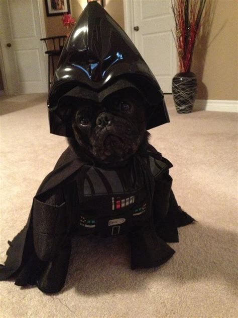 pug darth vader costume 22 wars costumes that you need rn