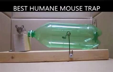 confectionnez un pi 232 ge 224 rats ou souris efficace et sans les tuer astuces de grand m 232 re