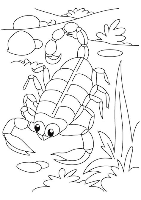 arthropod coloring page invert zoo lecture arthropod coloring pages 4 5