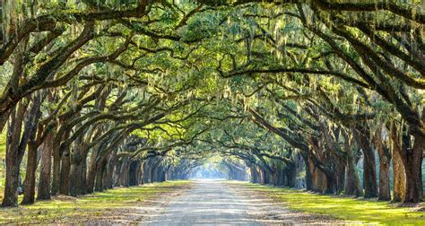 Or Lã Gã Is The Wormsloe Historic Site Worth A Visit Presidents Quarters Inn