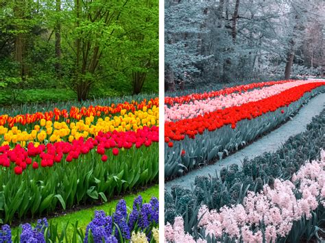 how do color blind see here s how who are colour blind see the world