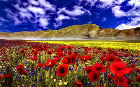 wallpaper flower field flower field wallpapers best wallpapers