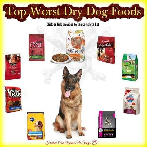 best puppy food brand best cat food best cat food reviews best cat food healthiest