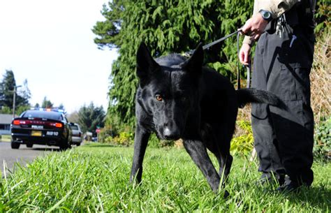 Coos County Court Records Patrol K 9 Quot Neeko Quot Joins Coos County Sheriff S Office Crime Courts Theworldlink