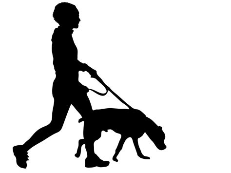 puppy walking walking free stock photo domain pictures