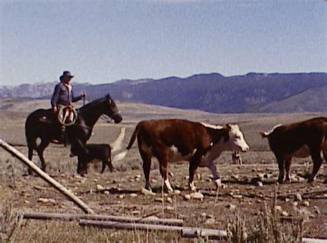 film the last cowboy the real cowboys of the prarie chicago film archives