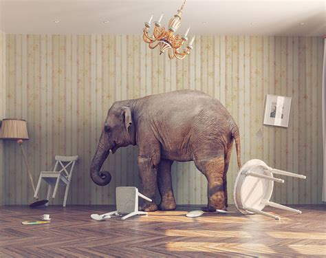 the in the room how to use the elephant in the room to your advantage chartec