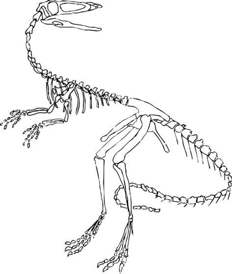 dinosaur skull coloring page velociraptor dinosaur skeleton coloring page dinosaurs