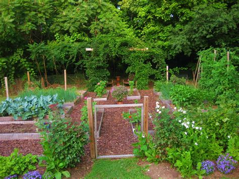 gardening picture your july veggie garden updates