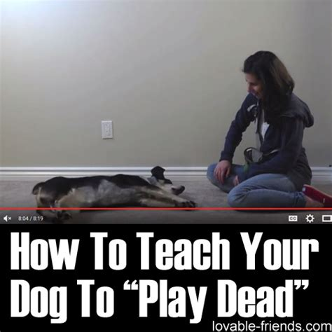 how to teach your dog to play dead lovable friends