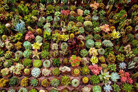 Garden Sale Plant Sale The Solipsist