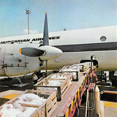 17 best images about air cargo history on hercules bristol and air
