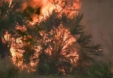florida wildfires florida wildfires force evacuations destroy homes