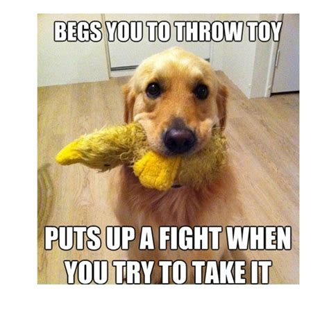 Dog Funny Meme - cute dog memes www pixshark com images galleries with