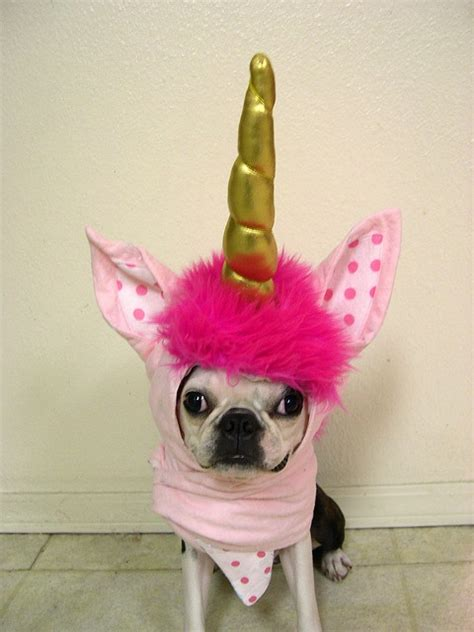 unicorn puppy eloise and the unicorn helmet quot return of the helmet quot by ms bird via flickr must